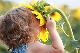 little-girl-smelling-sunflower