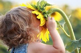 little-girl-smelling-sunflower