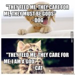 Забавна разлика между котета и кучета