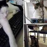 Котка в офиса? Всъщност идеята е доста добра
